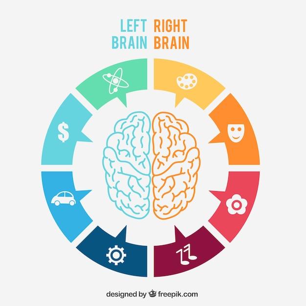 左右の脳のインフォグラフィック 無料ベクター