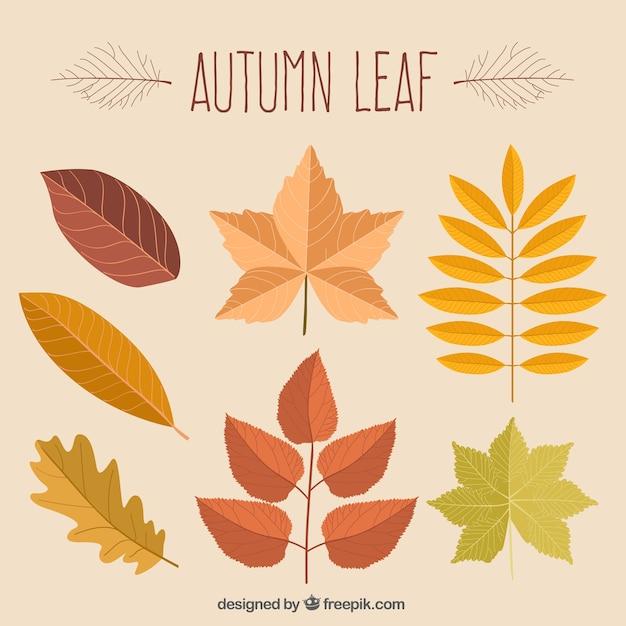 листья картинки нарисованные