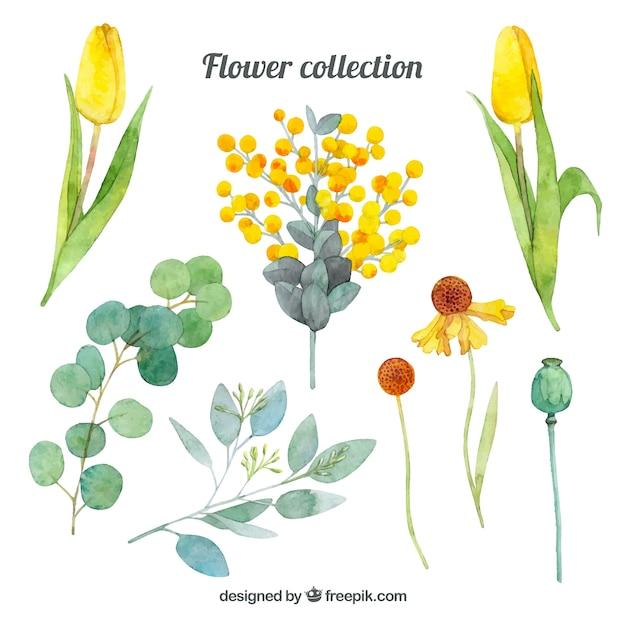 Коллекция цветов это
