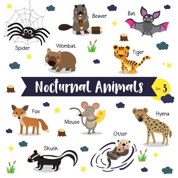 Nocturnal animal cartoon with animal name Premium Vector