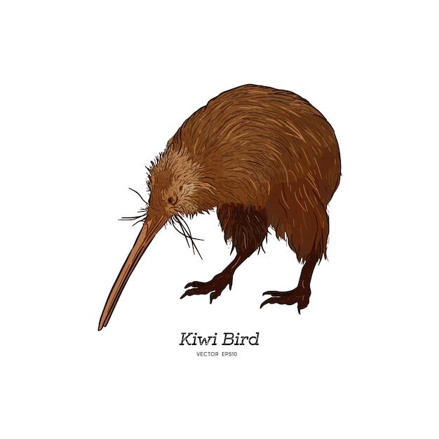 Северный остров браун киви птицы, иллюстрации. Premium векторы