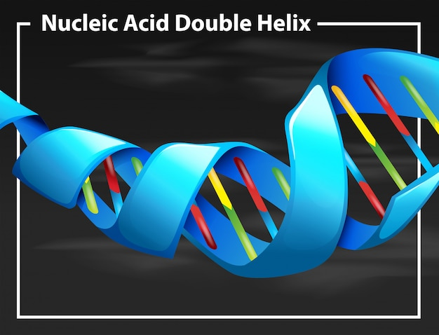Nucleic acid double helix Free Vector