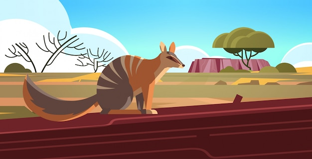 Numbat enjoying the sun in australia desert australian wild animal wildlife fauna concept landscape  horizontal Premium Vector