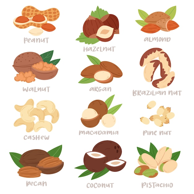 Ореховая скорлупа фундука или грецкого ореха и миндаля установила питание с иллюстрацией арахиса кешью и каштана на белом фоне Premium векторы