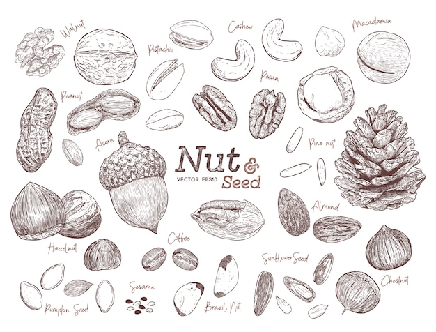 Nut and seed collection hand draw sketch vector. Premium Vector