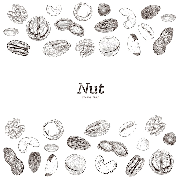 Nut and seed collection, hand draw sketch. Premium Vector