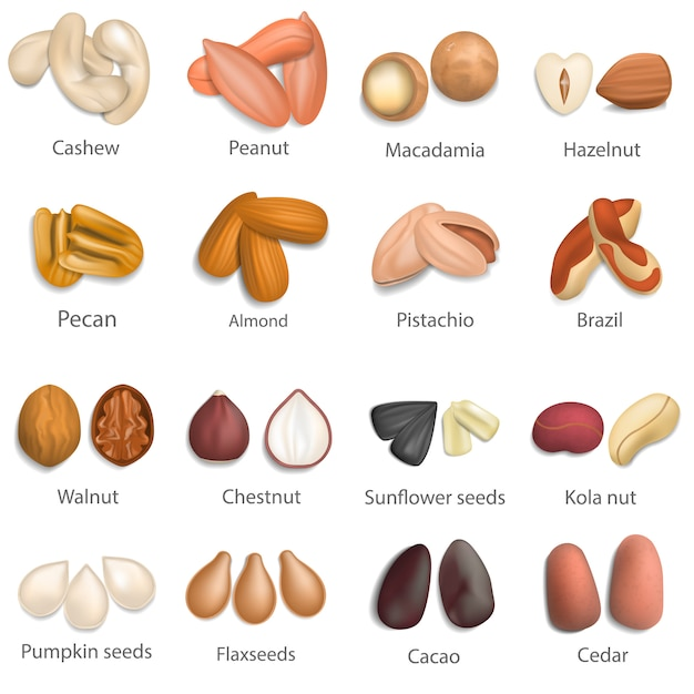 Nut types with signed names mockup set. realistic illustration of 16 nut types with signed names mockups for web Premium Vector