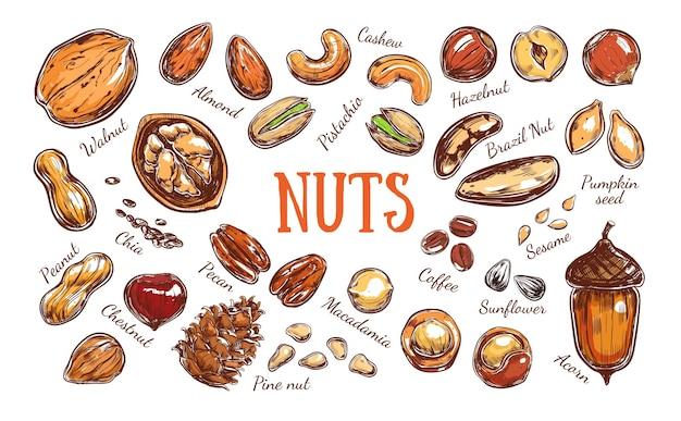Красочная коллекция орехов и семян Premium векторы