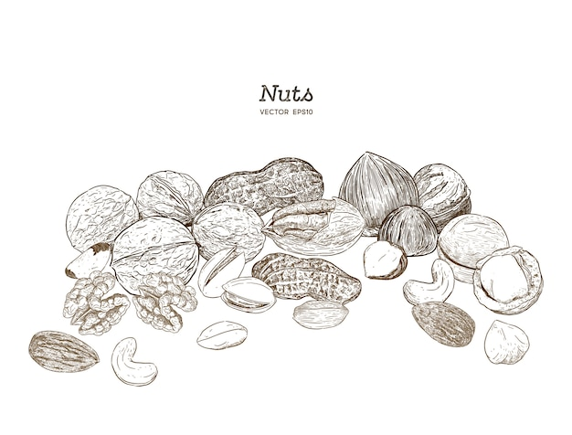 Nuts collection Premium Vector