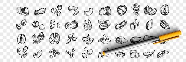 Набор орехов каракули. коллекция рисованной эскизов шаблоны шаблонов миндаля, кешью, макадамии, арахиса, кедра, фисташек, фундука, грецких орехов, семян на прозрачном фоне. иллюстрация натуральных продуктов питания. Premium векторы