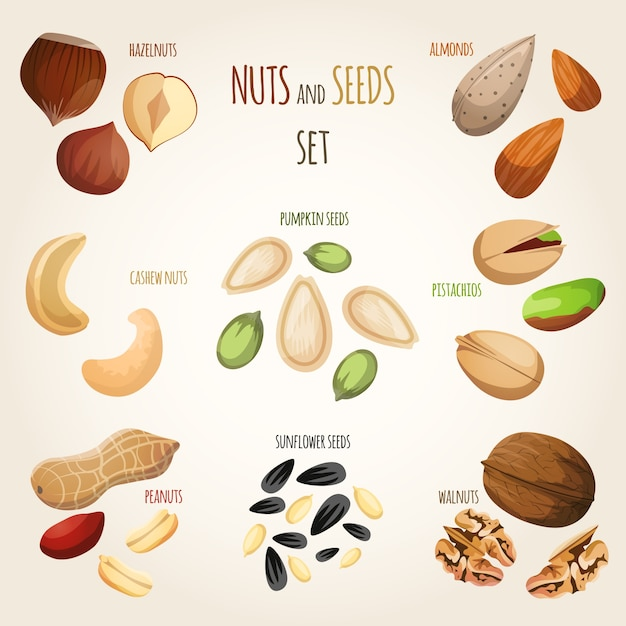 Nuts and seeds set Premium Vector