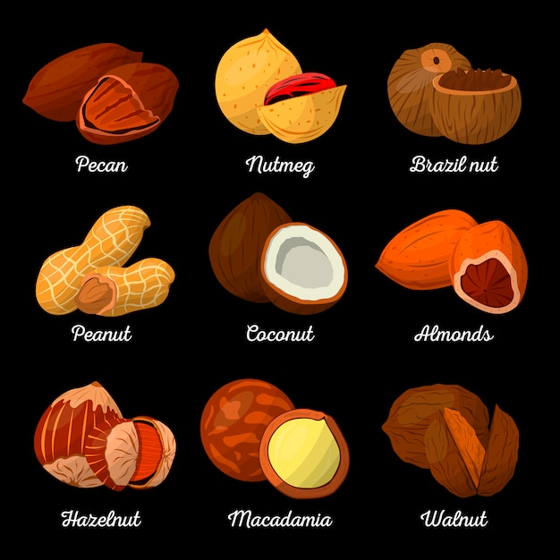 Nuts and seeds vector set Premium Vector