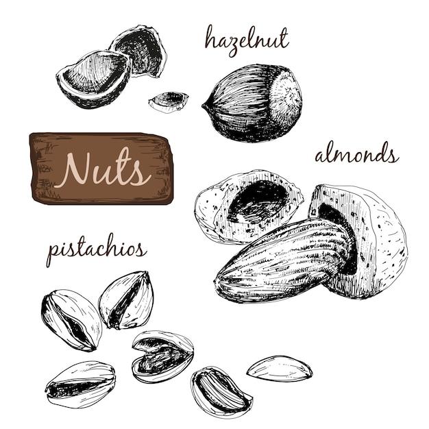Nuts. set of illustrations. Premium Vector
