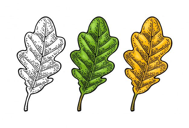 Дубовые листья установлены Premium векторы