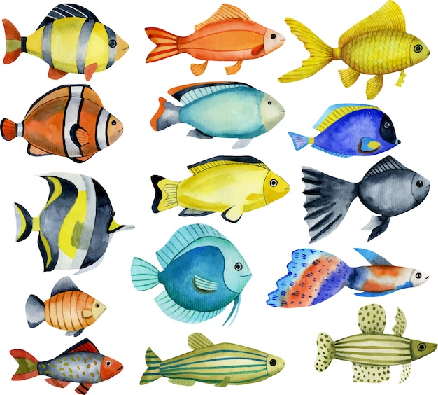 Oceanic fishes, watercolor collection Premium Vector
