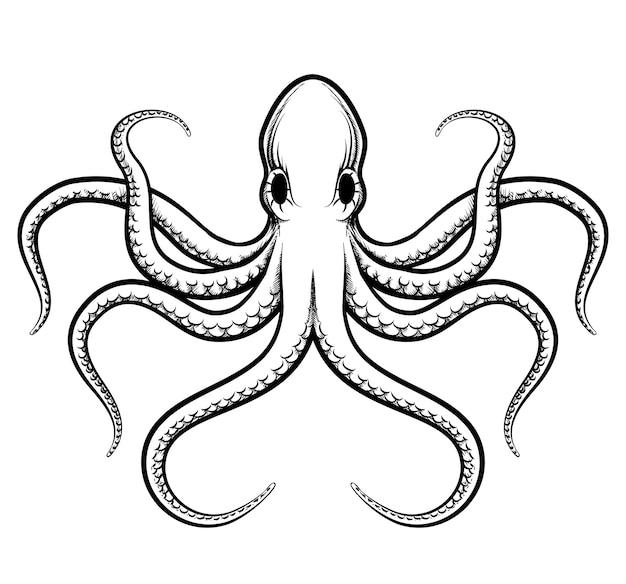 Illustrazione di polpo. linee nere di polpo splendidamente dipinte su sfondo bianco Vettore gratuito
