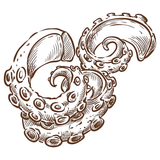 Осьминог щупальца вектор эскиз рука рисунок Premium векторы
