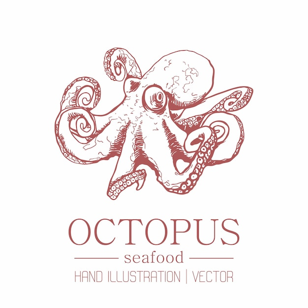 Octopus. vintage style. hand drawing. Premium Vector