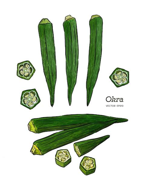 Okra, hand draw sketch vector. vegetable Premium Vector