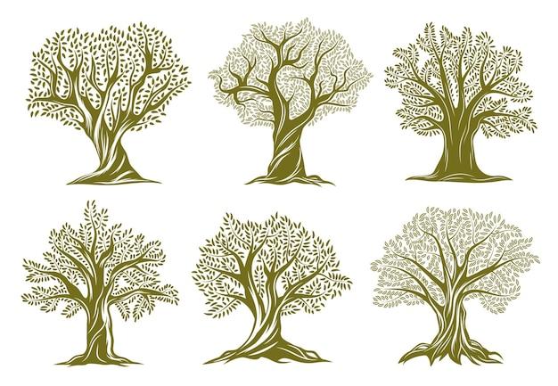 오래 된 올리브, 버드 나무 또는 오크 나무 새겨진 아이콘. 꼬인 줄기와 가지가있는 나무 프리미엄 벡터