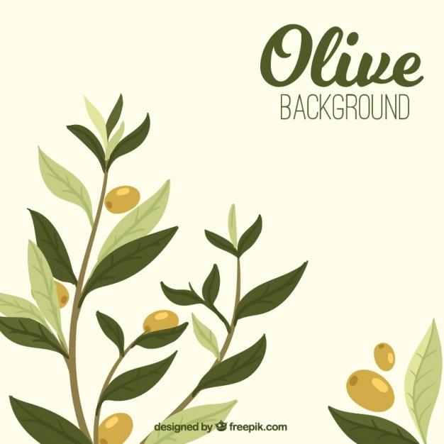 Sfondo di oliva con foglie in toni verdi Vettore gratuito