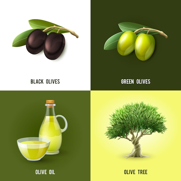 Olive concept Free Vector
