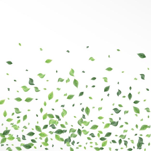 オリーブの葉の森 Premiumベクター