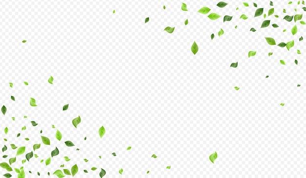 オリーブ緑風風透明背景バナー Premiumベクター