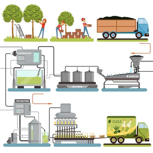 オリーブオイルの生産工程段階、オリーブの収穫、完成品の梱包、白い背景の消費者イラストへの配信 Premiumベクター
