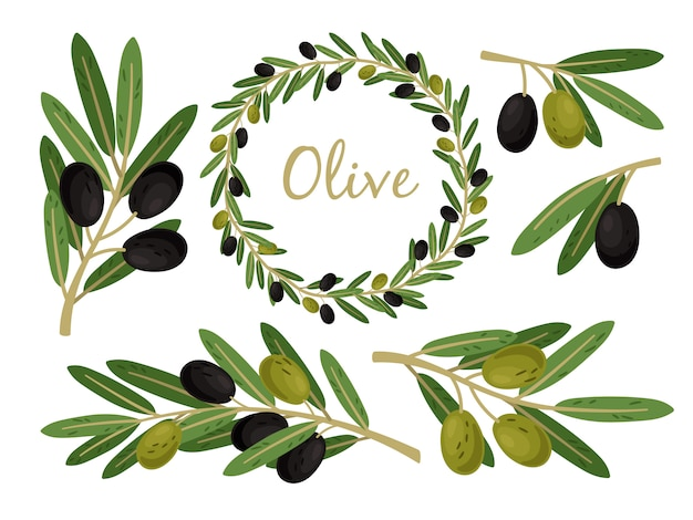 Premium Vector Olives Branches And Olive Crown Greek Olives Branch And Wreath Set Vector Summer Oil Food Tree Twigs And Leaves Alibaba.com offers 818 greek leaf crown products. https www freepik com profile preagreement getstarted 7807423