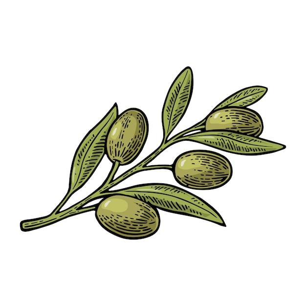 オリーブの枝と葉の図 Premiumベクター