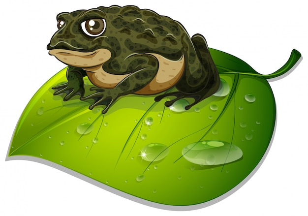 One toad on green leaf on white Free Vector