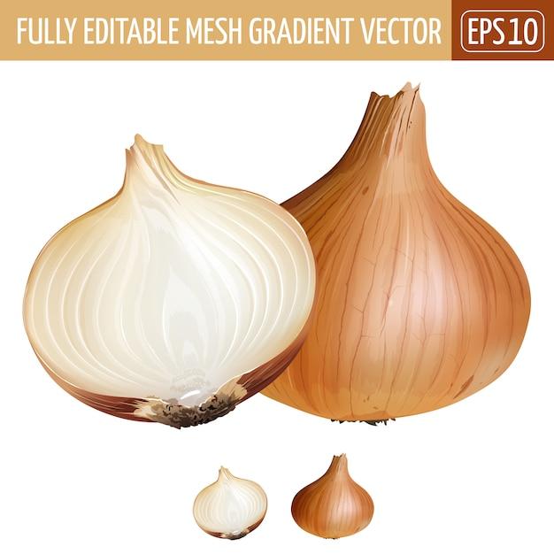 Onion illustration on white Premium Vector