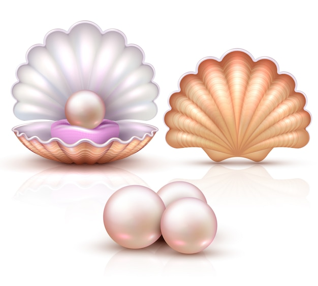 Opened and closed seashells with pearls isolated. shellfish vector illustration for beauty and luxury concept. shell and pearl, seashell luxury treasure Premium Vector