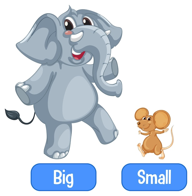 Opposite adjectives words with big and small Free Vector