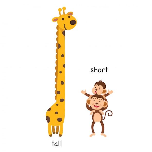 9. tall - short