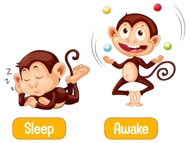 Opposite words with sleep and awake Free Vector