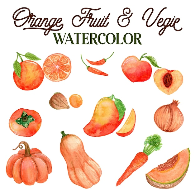 Оранжевые фрукты и овощи акварельные иллюстрации Premium векторы