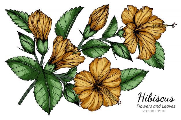 オレンジ色のハイビスカスの花と葉の白い背景のラインアートとイラストを描きます。 Premiumベクター