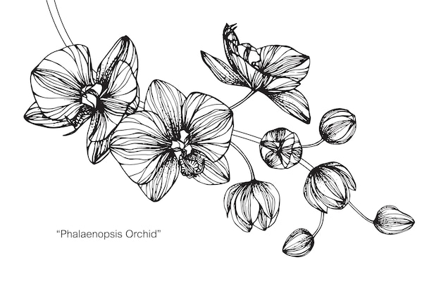 Orchid flower drawing illustration Premium Vector