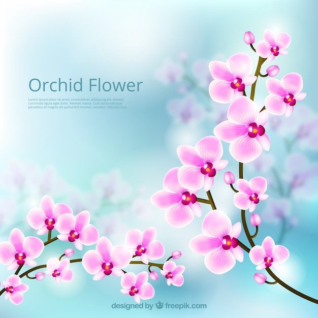Orchid Flower Lovely Background Free Vector