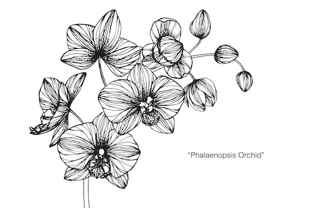 Orchid flower Premium Vector