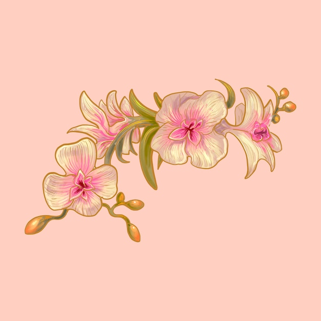 蘭の花のイラスト Premiumベクター