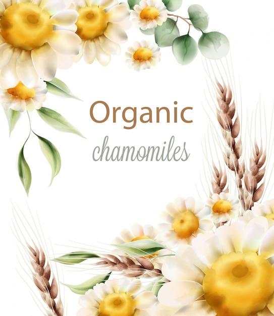 Органические ромашки цветы с зелеными листьями и колосья пшеницы Premium векторы