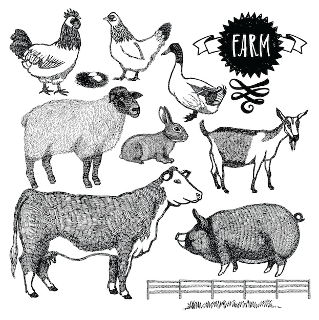 Organic farm animals set Free Vector