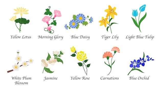 Organic nature botanic garden flower isolated collection Premium Vector