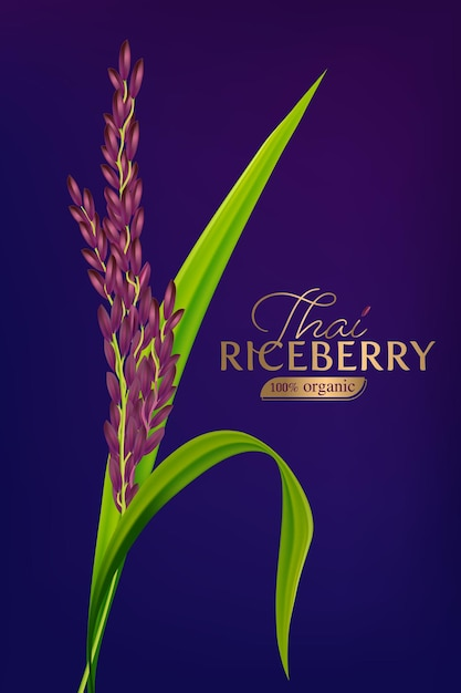 Organic paddy rice Premium Vector