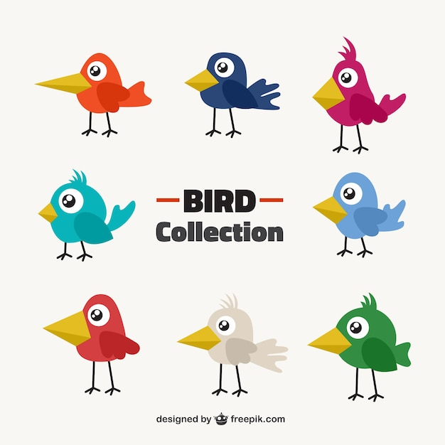 Original bird collection in colors