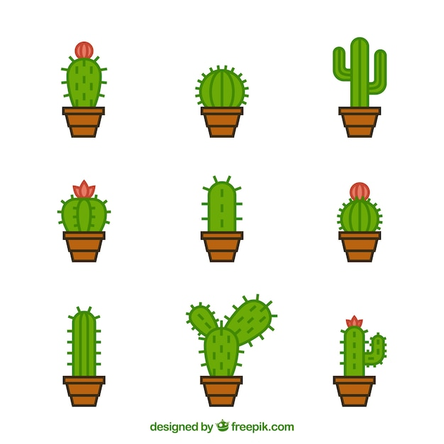 Original variety of modern cactus