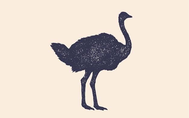 Ostrich Premium Vector
